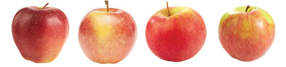 jablkanew