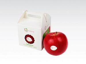 Jabłka grójeckie starawersja